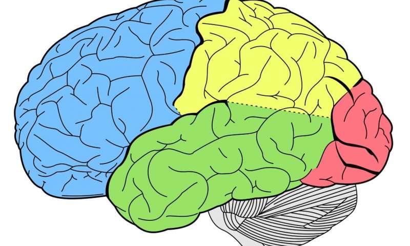 یادگیری دانش در مغز شما چگونه است