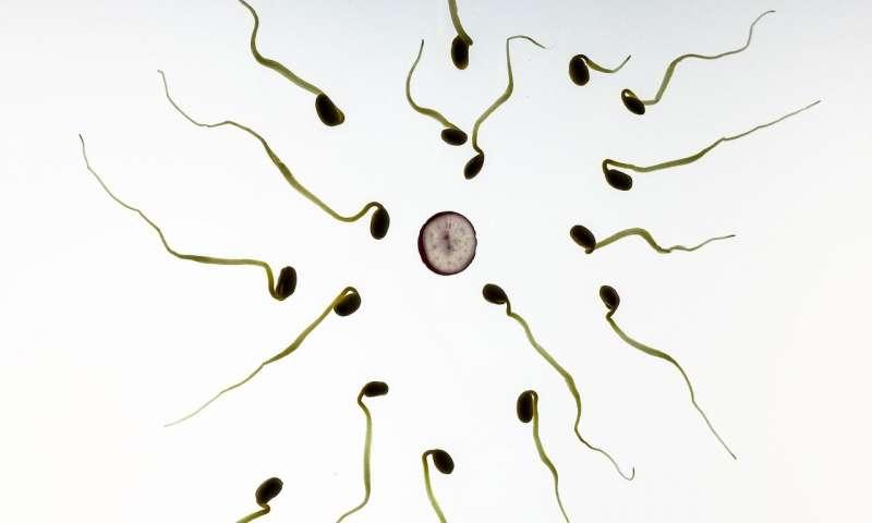 تخمک های زنان اسپرم برخی از مردان را نسبت به سایرین ترجیح می دهد