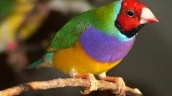 تصویر از راز تشخیص جنسیت پرندگان بدون نیاز به دامپزشک