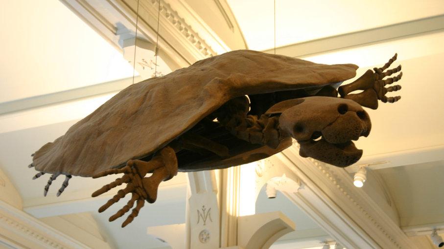 کشف لاک پشت های غول پیکر در آب های آمریکای جنوبی