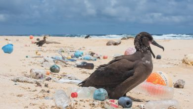 آلودگی زباله پلاستیک در اقیانوس ها تا سال 2040 دو برابر خواهد شد