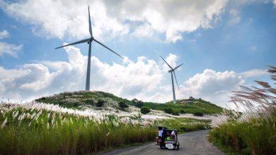 آیا توربین های بادی سلامتی انسان را به خطر می اندازند؟