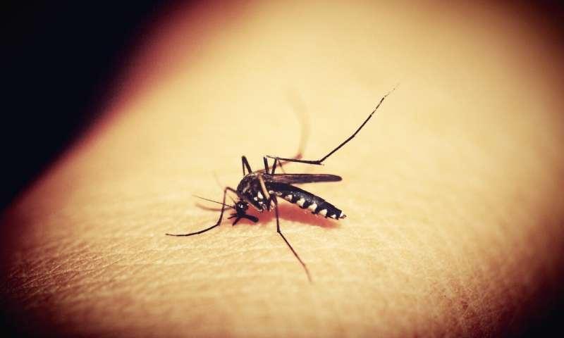 کشف جدید به تولید داروی مؤثر برای درمان مالاریا کمک می کند