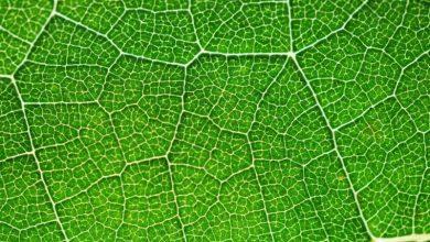 تبدیل انرژی خورشیدی به سوخت هیدروژن با کمک فتوسنتز