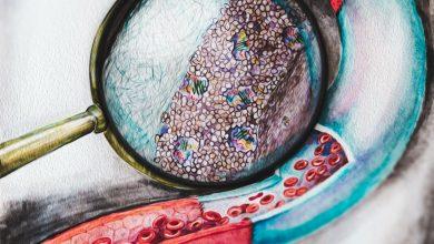 تولید رگ های خونی مصنوعی جایگزین با استفاده از ماده الاستومر