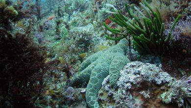 شبکه های غذایی دریایی با افزایش دما و تغییرات آب و هوا از بین می روند