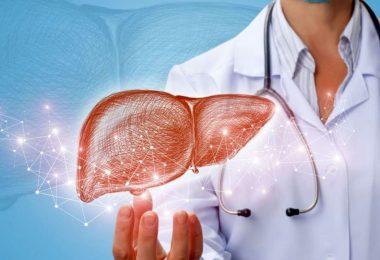 وظیفه کبد در بدن چیست؟آسیب پذیری کبد در مقابل مصرف خودسرانه داروها