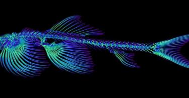 شناسایی 11 گونه از ماهی ها که قادر به راه رفتن در خشکی هستند