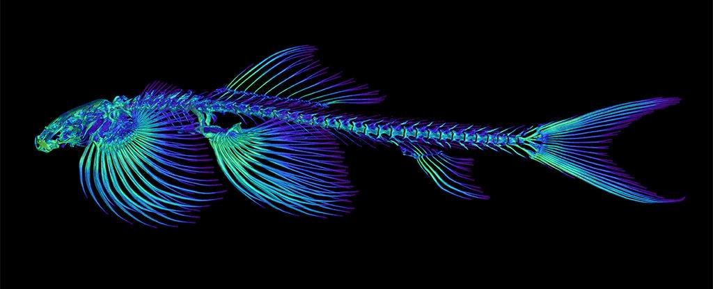 تصویر از شناسایی 11 گونه از ماهی ها که قادر به راه رفتن در خشکی هستند