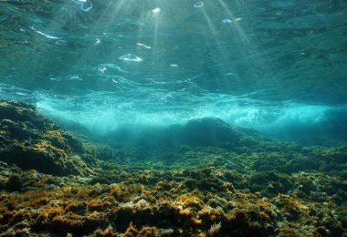 امواج گرمایی دریایی بیش از 20 برابر بیشتر شده است