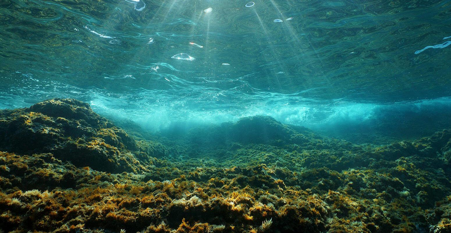 تصویر از امواج گرمایی دریایی بیش از 20 برابر بیشتر شده است