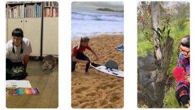 قابلیت دیدن حیوانات استرالیایی با AR در گوگل موتور جستجوی گوگل حیات وحش