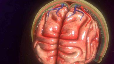 کشف سلولهای ایمنی IgA برای محافظت از مغز مننژ در روده آموزش دیده اند